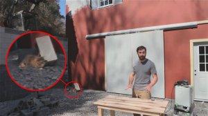 Cтоляр спас кота рискуя своей жизнью