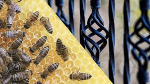 Воронение стали пчелиным воском в домашних условиях